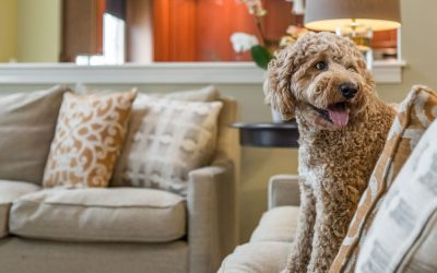 Stylish and Practical Pet-Friendly Interiors